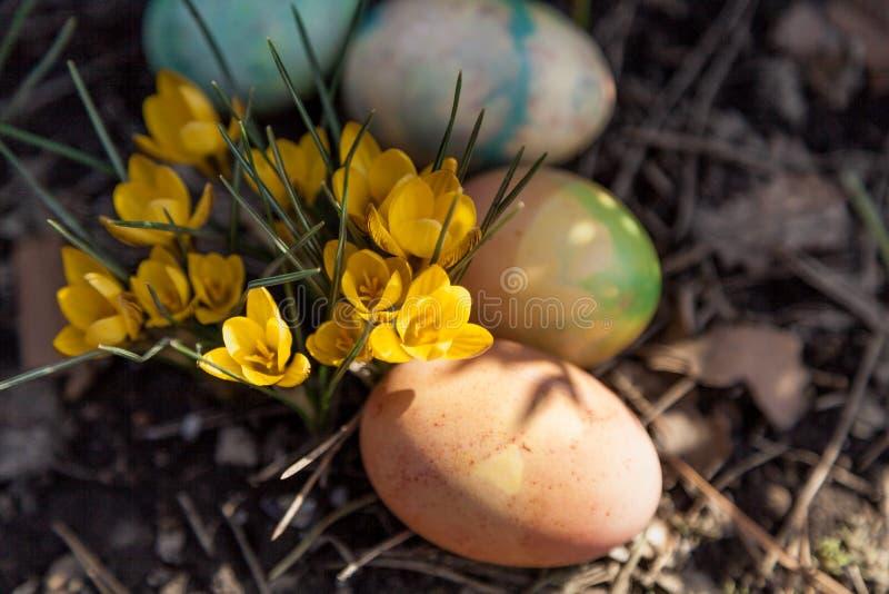 Gruppe von Ostern malte Eier auf Bett von Krokussen lizenzfreies stockfoto