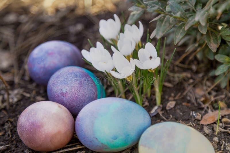 Gruppe von Ostern malte Eier auf Bett von Krokussen stockbild