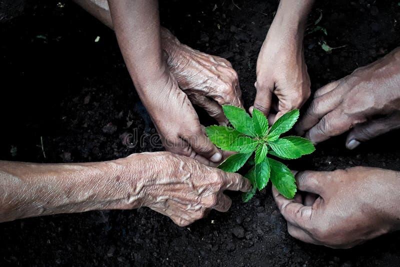 Gruppe von Personenen-Pflanzen stockfotos