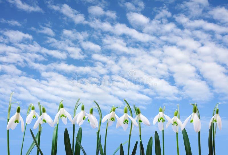 Gruppe von snowdrop Blumenwachsendem in der Reihe über Himmel stockbild