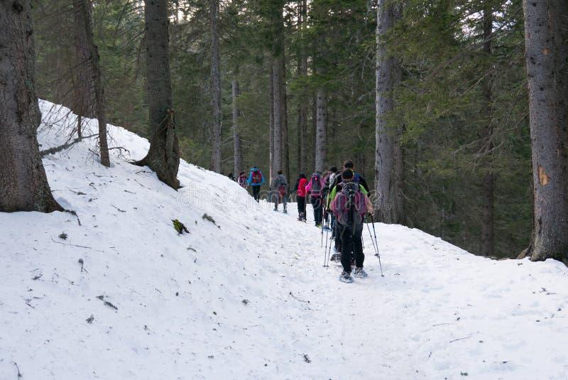 Gruppe Wanderertrekking in den Bergen der Alpen Die Trekkers laufen einen schneebedeckten Wald durch stockbild