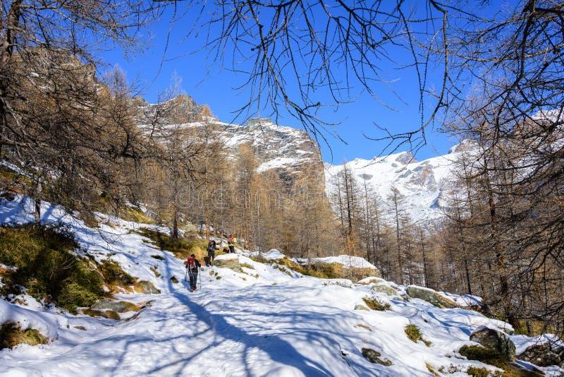 Gruppe Wanderertrekking in den Bergen der Alpen Die Trekkers laufen einen schneebedeckten Wald durch lizenzfreies stockfoto