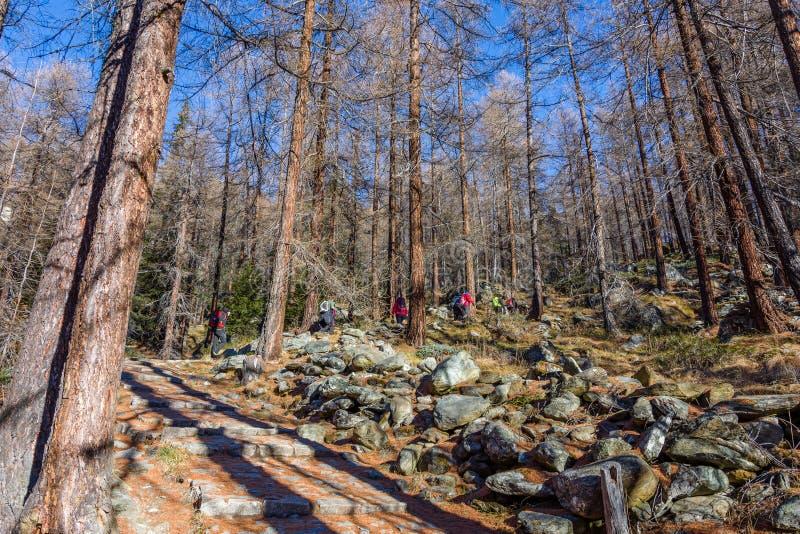 Gruppe Wanderertrekking in den Bergen der Alpen Die Trekkers laufen einen Wald in Val-d'Ayas auf dem Aostatal durch lizenzfreie stockfotografie