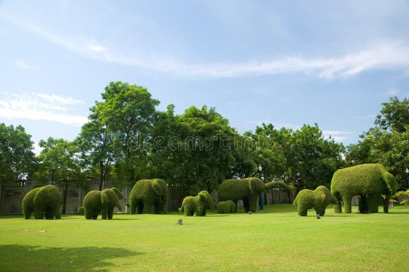 Gruppe zwergartigen aussehen wie Elefant lizenzfreies stockbild