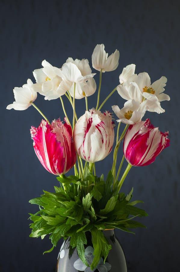 Gruppen av anemoner för för vårtulpanblomma och vit blommar på viole royaltyfri foto