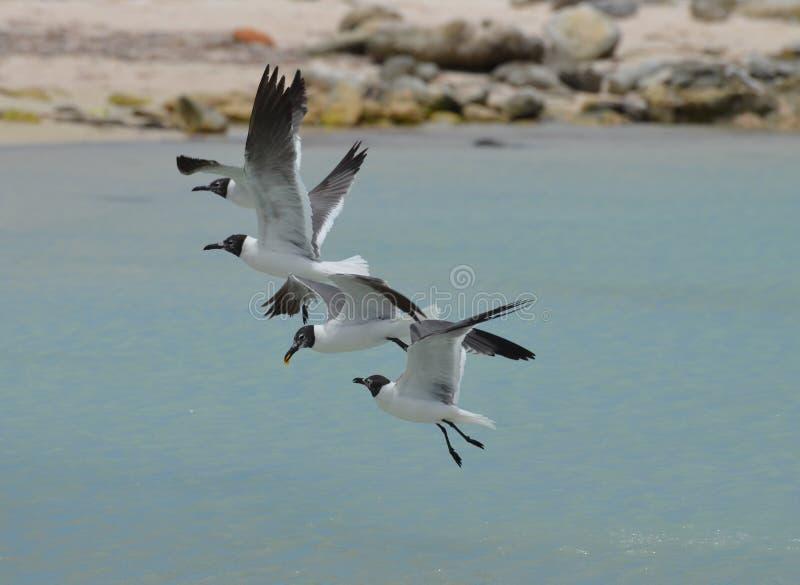 Gruppen av att skratta fiskmåsar som över flyger, behandla som ett barn stranden arkivfoto