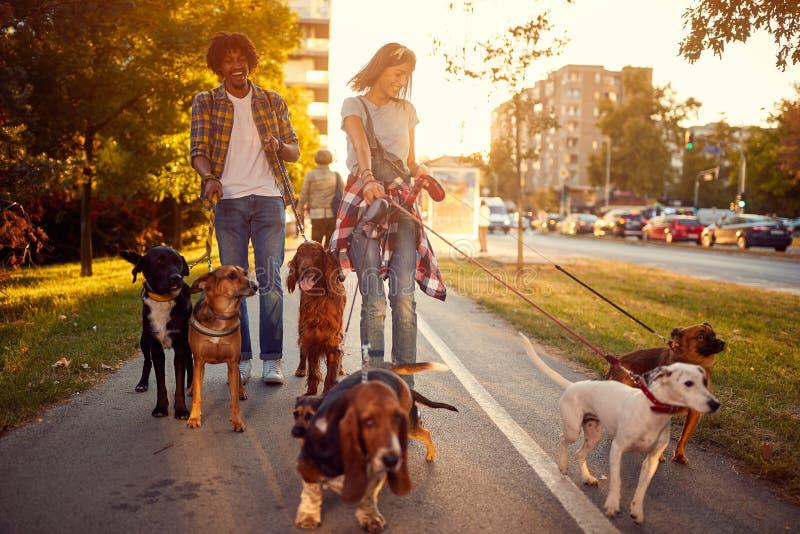 Gruppen av hundkapplöpning i parkerar att gå med flickan och mannen royaltyfri foto