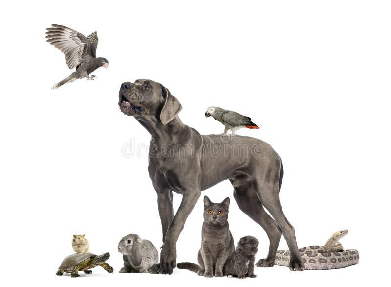 Gruppen av husdjur - förfölja, katten, fågeln, reptilen, kanin arkivfoto