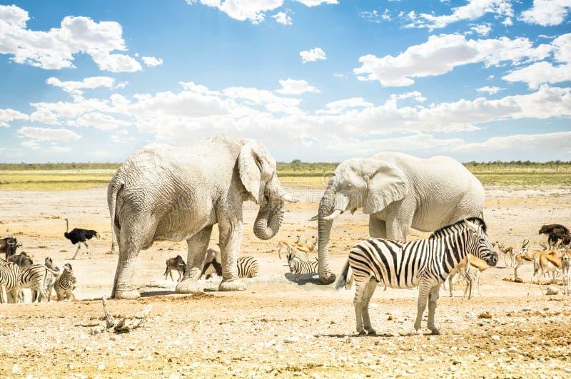 Gruppen av lösa blandade djur som kopplar av i Etosha, parkerar royaltyfria foton