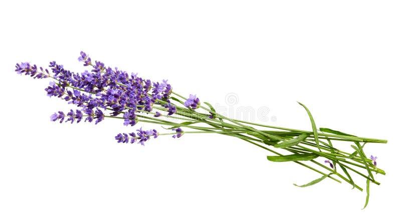 Gruppen av lavendel blommar på vit bakgrund royaltyfria bilder