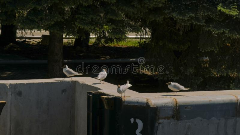 Gruppen av seagulls går på den konkreta pir arkivbilder