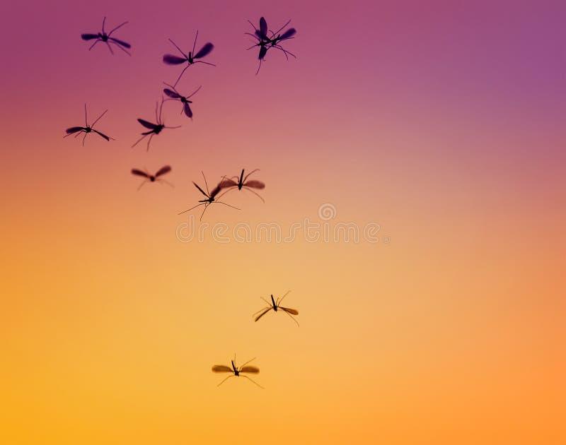 gruppen av små farliga krypmyggor flyger mot arkivfoto