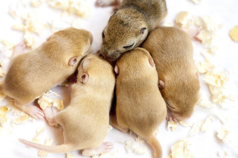 Gruppen av små gulliga sova möss behandla som ett barn Ny frigörare formad om dollarsedel arkivfoton