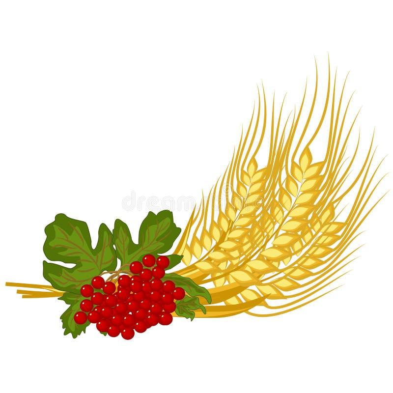 Gruppen av veteöron och viburnumen fattar - vektorclipart Röda frukter av kalynaen och mogna guld- spikelets av vete är blom- sym royaltyfri illustrationer