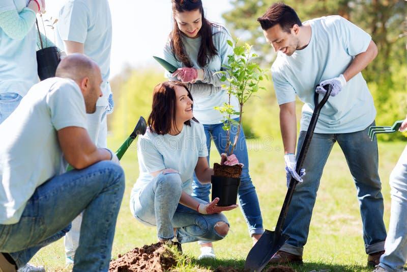 Gruppen av volontärer som planterar trädet parkerar in royaltyfria bilder