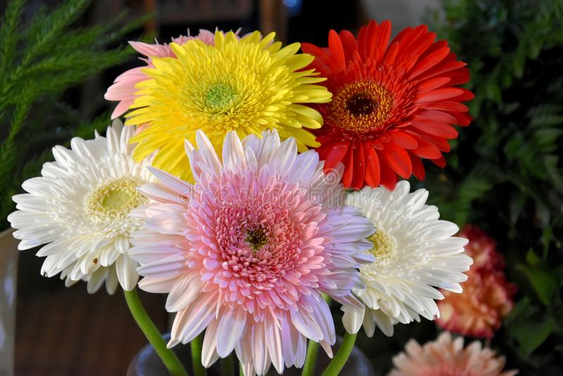 gruppen blommar gerberaen royaltyfri fotografi