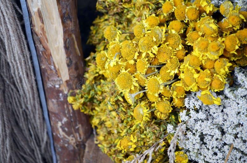Grupper av medicinska blommor gränsar på lantligt trä fotografering för bildbyråer