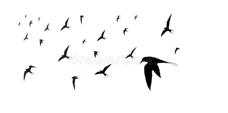 Gruppera av Lesser Terns Silhouette arkivfoton