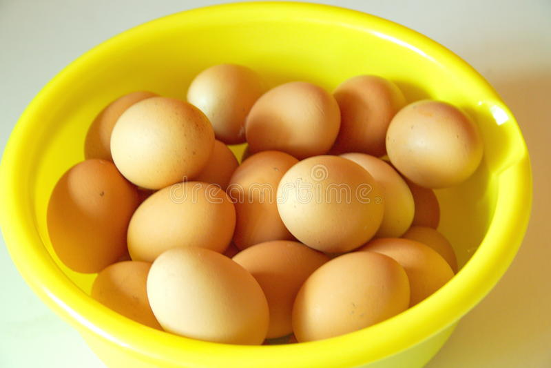 Gruppering av ägg, sikt för öga för fågel` s royaltyfria foton