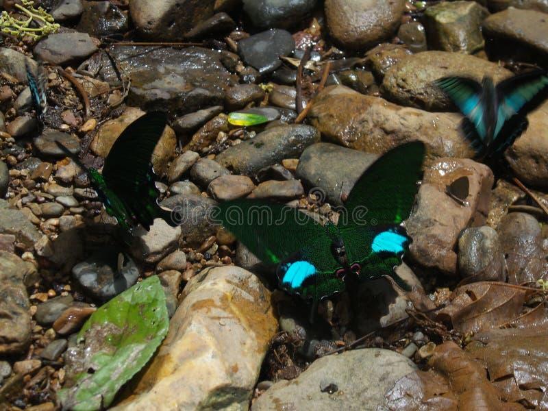 Gruppgrupp som är collectible av familjfjärilar arkivbild