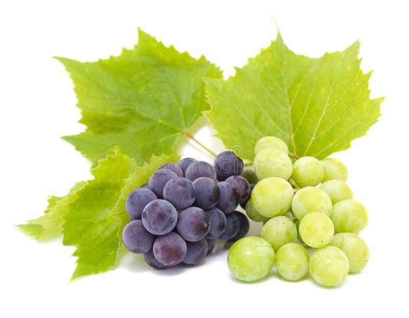 Gruppi di terminali dell'uva blu e bianca immagine stock