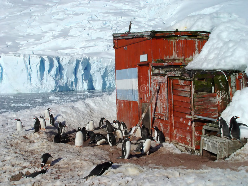 Gruppo antartico del pinguino fotografie stock