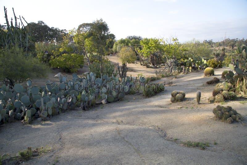 Gruppo Catcus che cresce nella balboa Park City San Diego CA fotografia stock