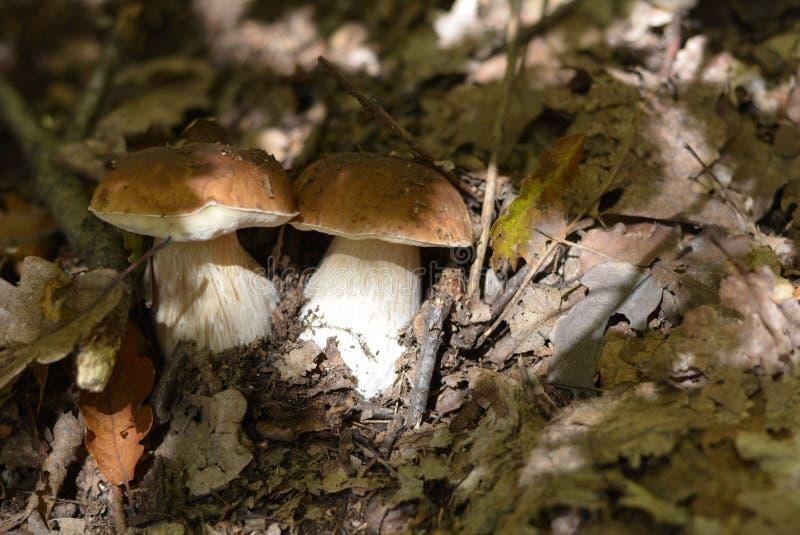 Gruppo dei funghi fotografia stock libera da diritti