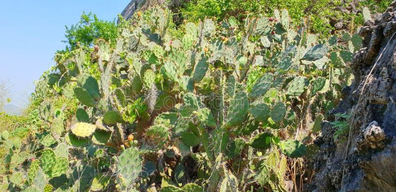 Gruppo del cactus sul fondo del cielo blu spine del cactus, fotografie stock libere da diritti