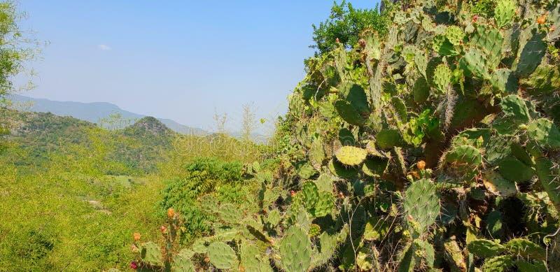 Gruppo del cactus sul fondo del cielo blu spine del cactus, immagine stock libera da diritti