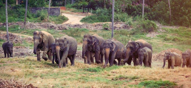 Gruppo dell'elefante vicino ad una giungla immagine stock
