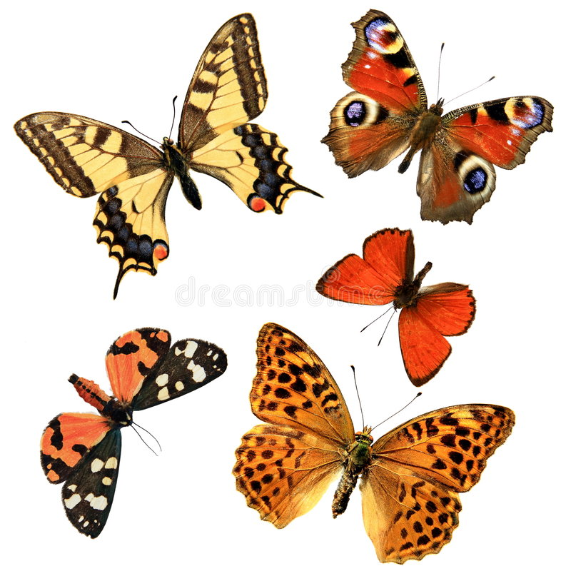 Gruppo della farfalla fotografia stock