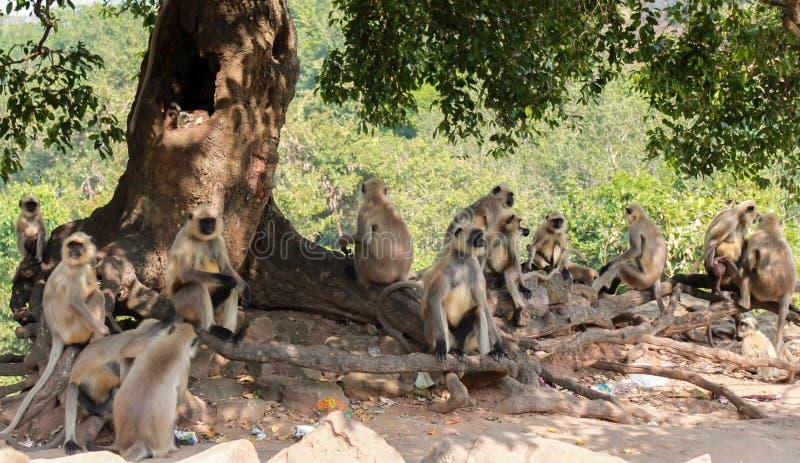 Gruppo della scimmia immagine stock libera da diritti