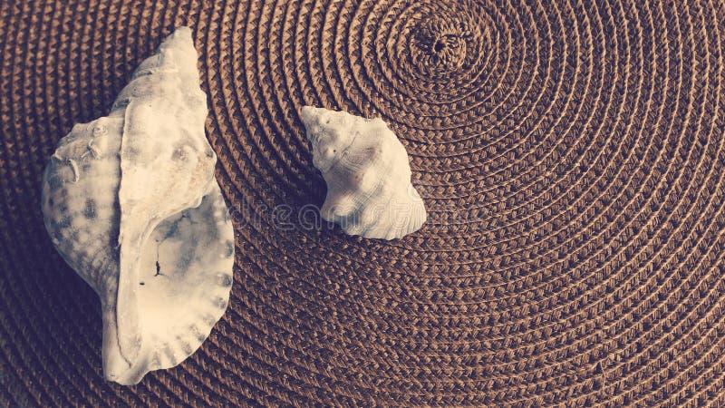 Download Gruppo delle conchiglie fotografia stock. Immagine di mediterraneo - 55363188
