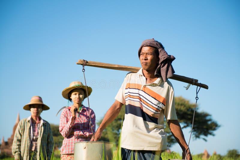 Gruppo di agricoltori asiatici tradizionali fotografia stock