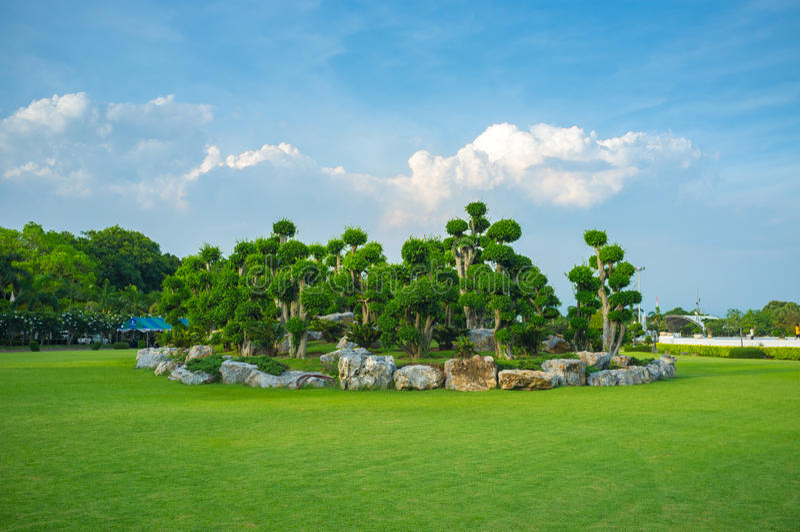 Gruppo di alberi fotografie stock