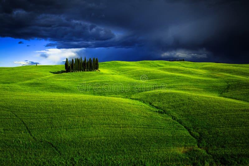 Gruppo di alberi di cipresso in Toscana fotografia stock