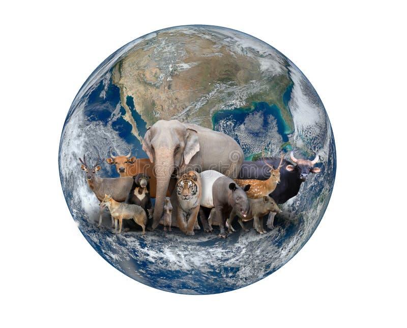 Gruppo di animale dell'Asia con pianeta Terra fotografia stock
