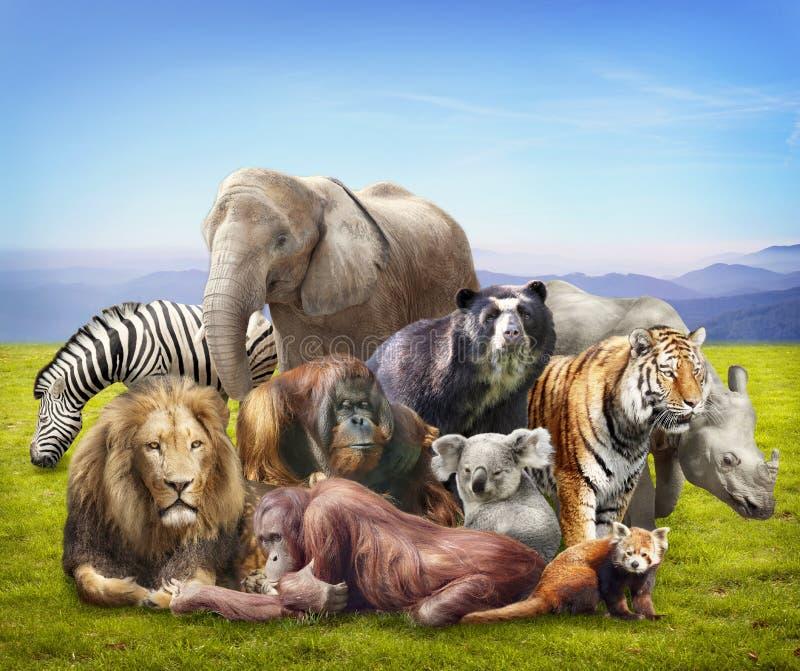 Gruppo di animali fotografie stock