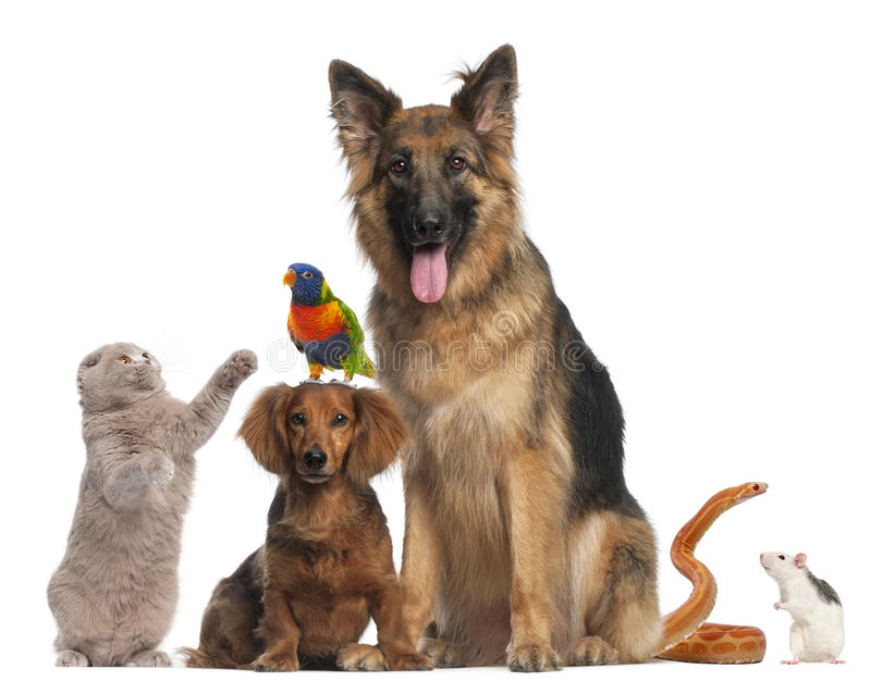 Gruppo di animali davanti a priorità bassa bianca immagine stock libera da diritti