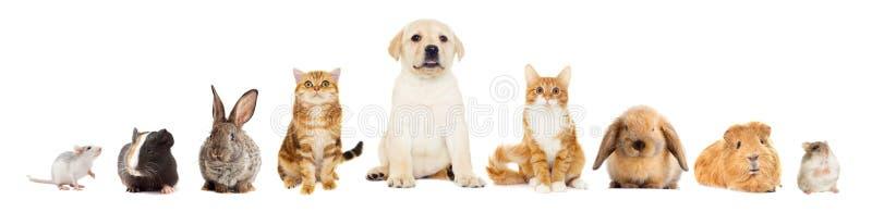 Gruppo di animali domestici fotografia stock libera da diritti