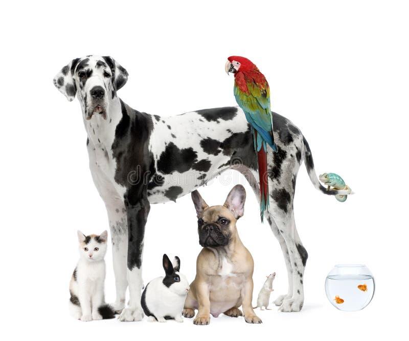 Gruppo di animali domestici davanti a priorità bassa bianca