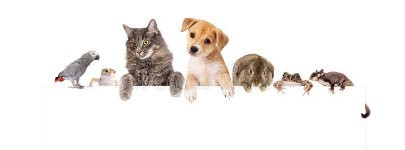 Gruppo di animali domestici domestici sopra l'insegna bianca immagini stock libere da diritti
