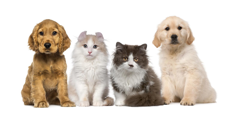 Gruppo di animali domestici: gattino e cucciolo su un crudo fotografia stock libera da diritti