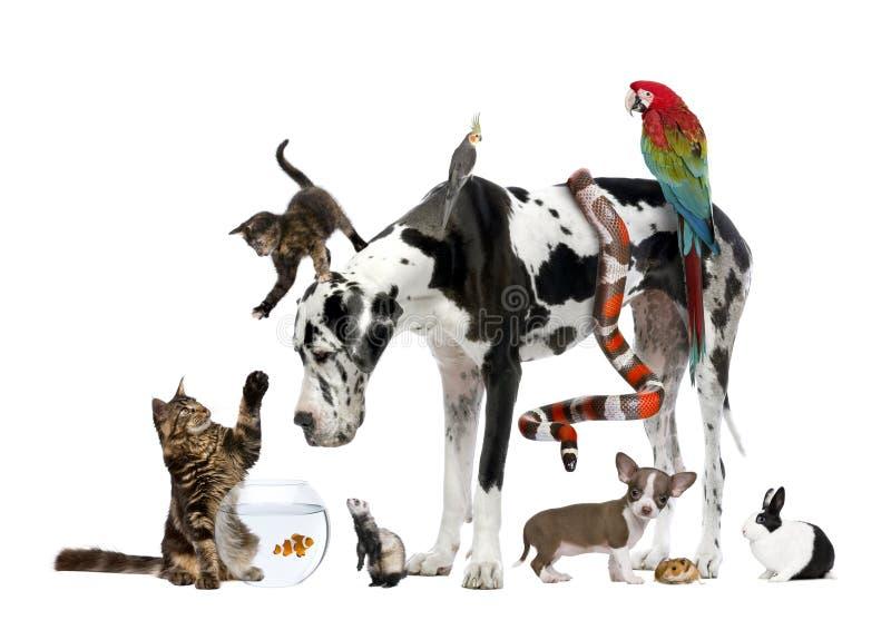 Gruppo di animali domestici insieme fotografia stock libera da diritti