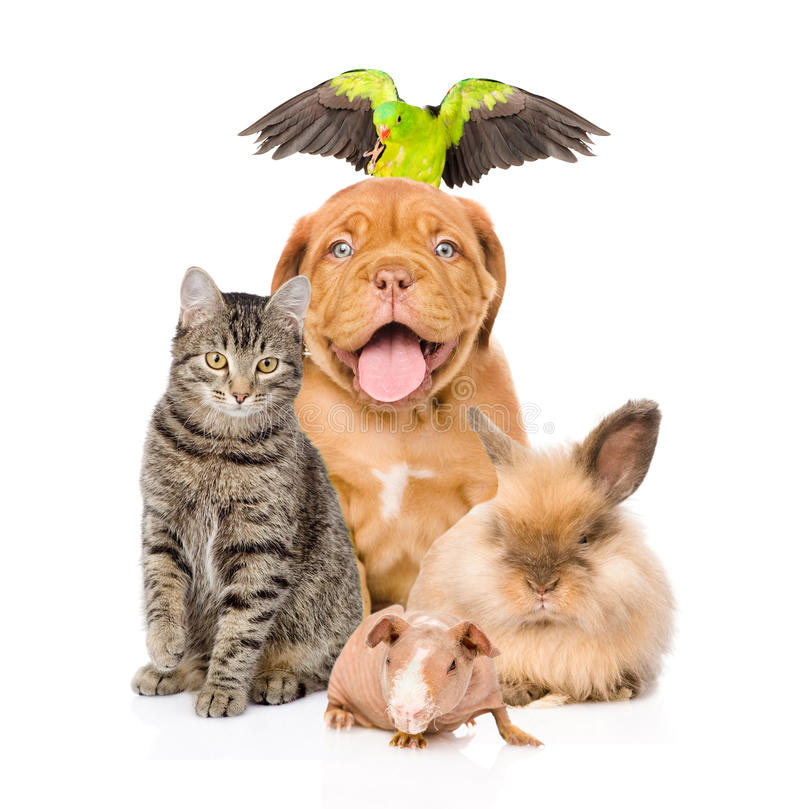 Gruppo di animali domestici insieme nella parte anteriore immagini stock libere da diritti