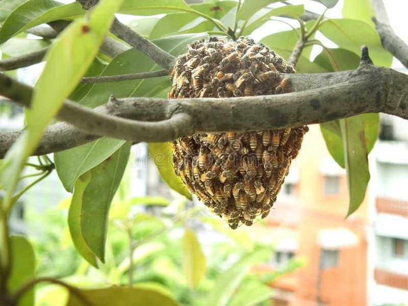 Gruppo di ape fotografia stock