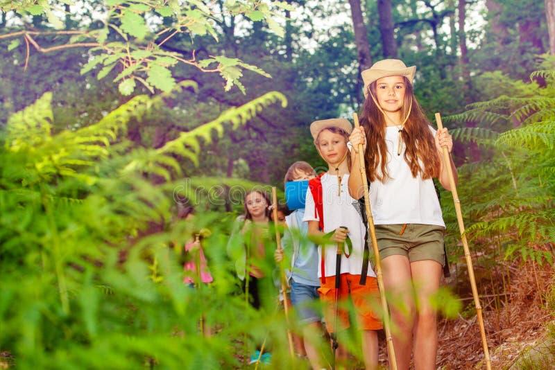 Gruppo di bambini su una traccia di escursione nella foresta fotografia stock libera da diritti