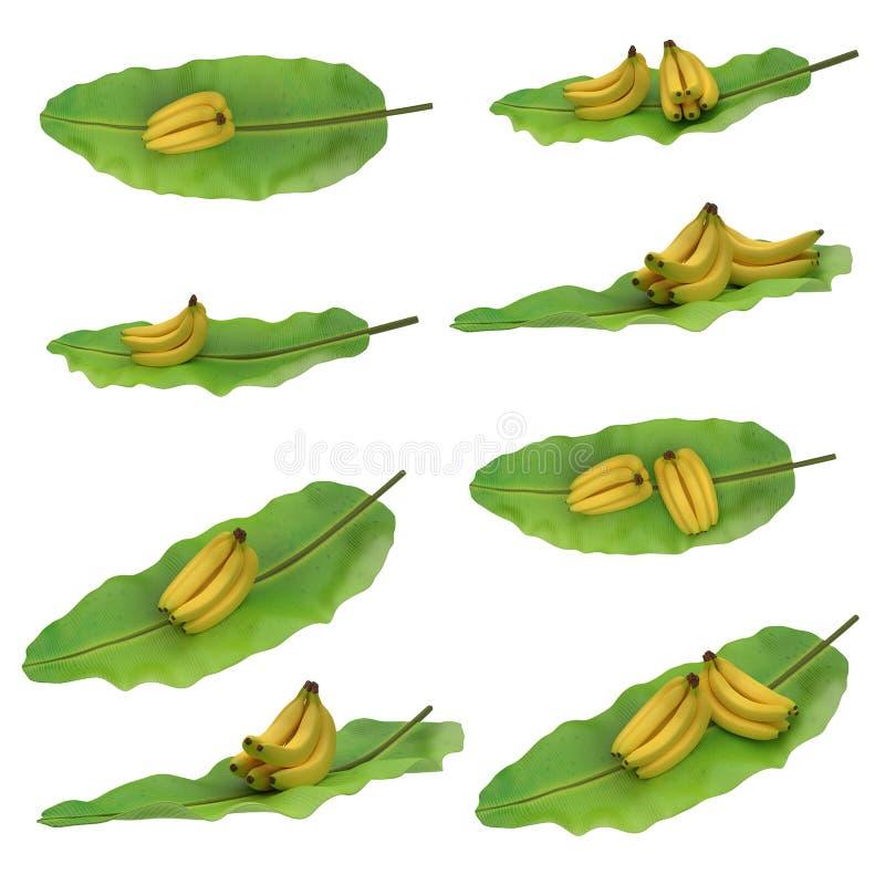 Gruppo di banane disposte sulla foglia della banana isolata su fondo bianco Viste differenti fotografie stock libere da diritti