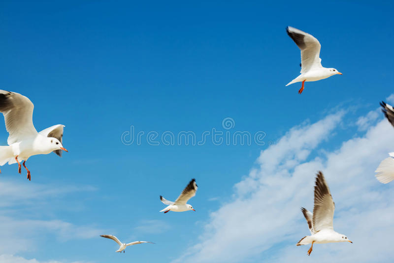 Gruppo di bianco del gabbiano fotografie stock